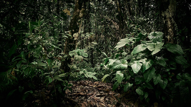 "Featured image for ""Kontraste in Kolumbien"""